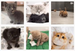 صورة مجمعة لقطط على انستقرام