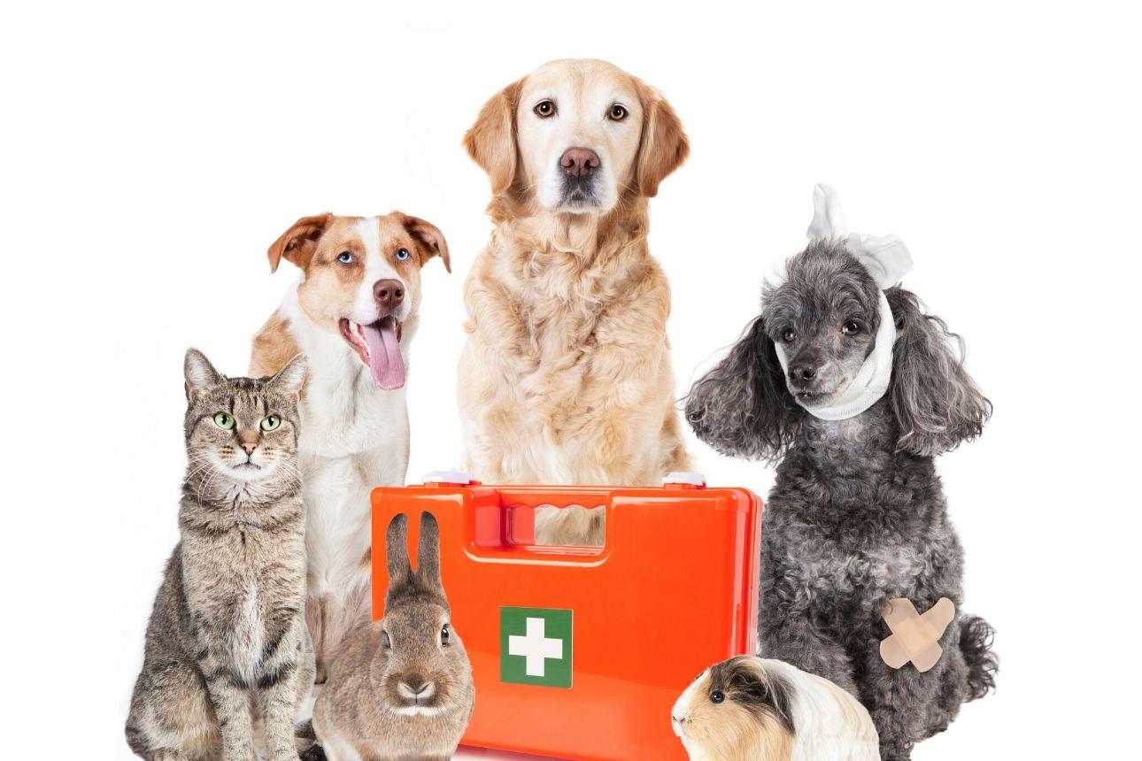 كيف تساعدك الحيوانات في التسويق لعلامتك التجارية؟